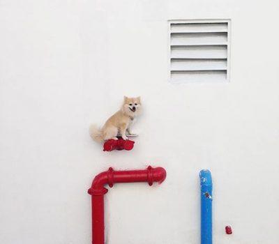 Pomeranian,coonhound,Q,Maddie