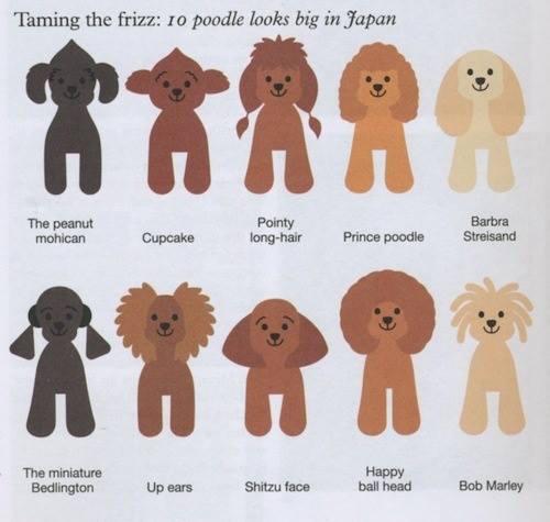 Asian Fusion Grooming,grooming,hair