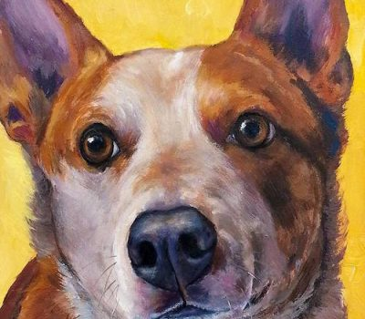 Welsh Collie,Bluey,Australian Cattle dog, Beagle,Border Collie,Guinness World Record