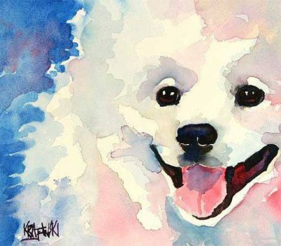 American Eskimo Dog,spitz,Keeshond,Pomeranian,Dog Beautiful,nickname