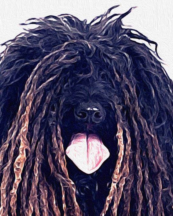 Puli, Jesus,legend,myth,folktale,sheepdog