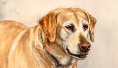 state dog,Maine,Labrador Retriever,