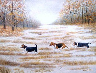 field trial,Beagle,