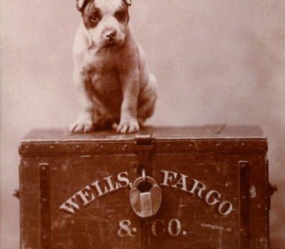 Mastiff,Bull Terrier,bank, wells fargo, mascot