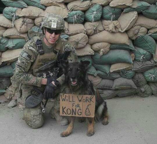 German Shepherd Dog,military dog,war dog,Kong
