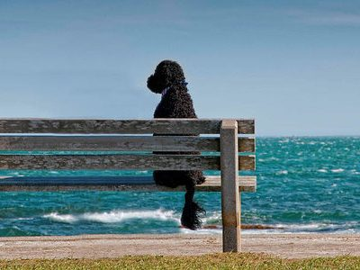 Portuguese Water Dog,Vasco Bensaude,Carla Molinari,First International Congress of the Portuguese Water Dog
