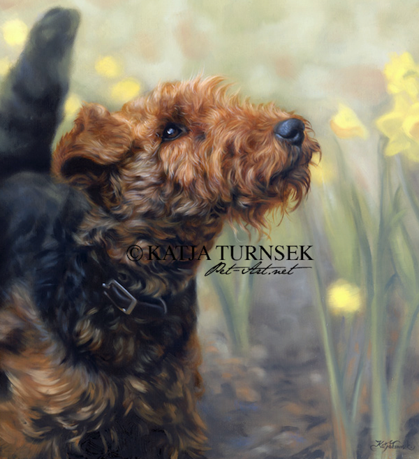 Welsh Terrier,Old English Wire- haired Black and Tan Terrier