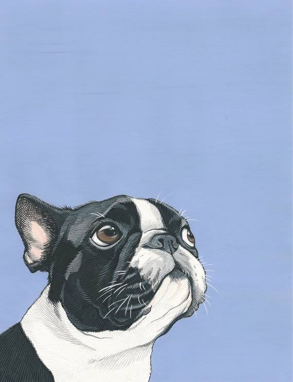 Taxonomic Hierarchy,Boston Terrier,