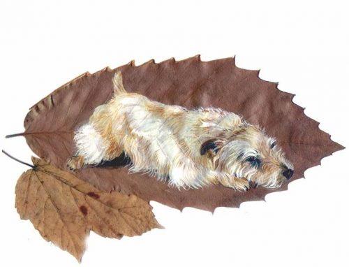 Glen of Imaal Terrier,miniature Irish Wolfhounds on short legs,turnspit dog,