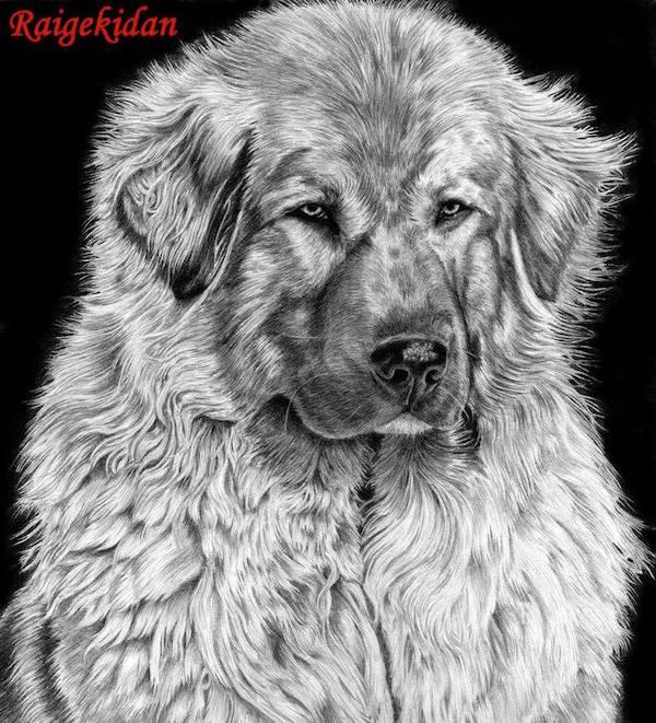 Sarplaninac,Macedonia-Yugoslav Shepherd Dog Sarplaninac,Illyrian Shepherd Dog,LGD,livestock guardian dog,Tito,