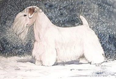 Sealyham Terrier, Captain Tucker-Edwardes, Dandie Dinmont Terrier, Fox Terrier, Cheshire Terrier, Corgi, Robert Leighton, West Highland White Terrier,