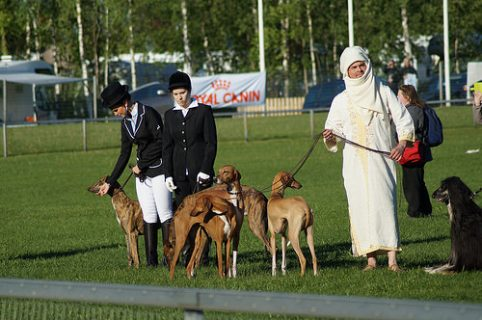 Coursing,Elizabeth I, the laws of the leash,Swaffham Coursing Society