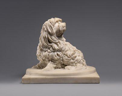 Maltese,Shock dog,nicknames,Ye Ancient Dogge of Malta,Canis Melitei