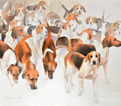 English Foxhound,breed standard,