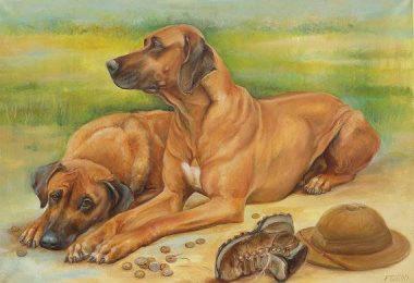 Rhodesian Ridgeback,lion dog,Phu Quoc,ridge,ridgeback,Hottentot