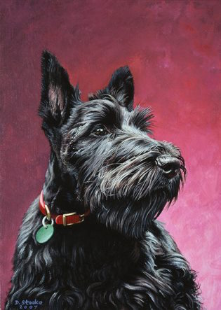 Scottish Terrier,Aberdeen Terrier, eyes