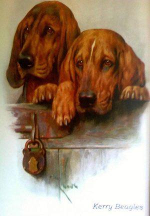 Kerry Beagle,The Ryan Family's Scarteen,Ryan family,irish,hound