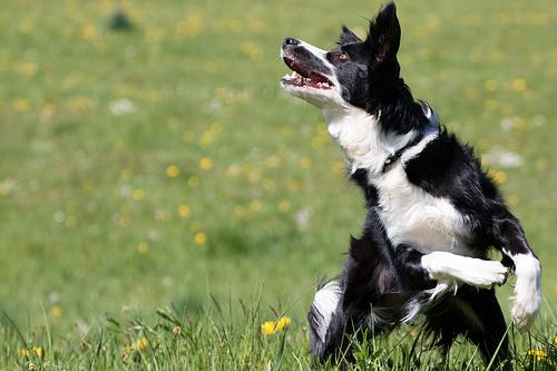Dog Agility Training New Mexico