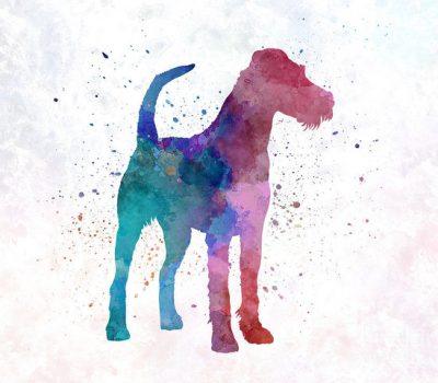 Irish Terrier,Ireland,war dog