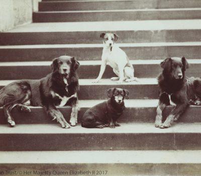 Queen Victoria,Irish Terrier, Skye Terrier, Dachshund, Pug, King Charles Spaniel, Scotch Terrier, Pomeranian, Greyhound, Deerhound,Collie,railway dog,