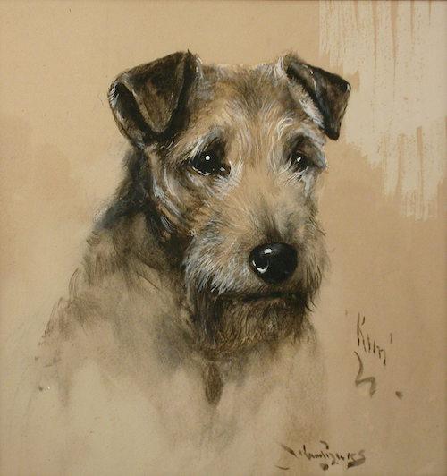 Elterwater, Patterdale,Cumberland Terrier, Westmoreland Terrier, Colored Working Terrier,Lakeland Terrier