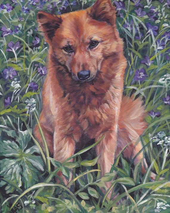 Laika,Finnish Spitz,Barking Bird Dog