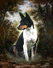Decker Rat Terrier,Rat Terrier,Decker Giants,Milton Decker,Betty and Chris Lindseth,