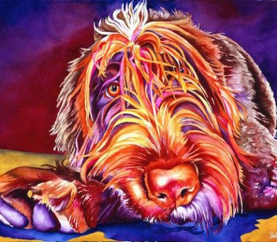 Wirehaired Pointing Griffon,head,