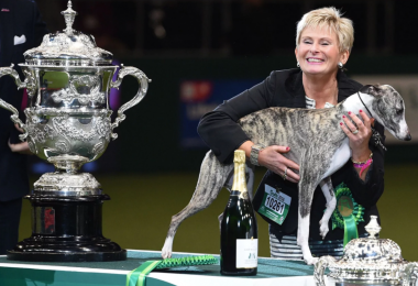 Whippets,Crufts,