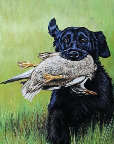 Remove term: Flat-Coated Retriever Flat-Coated Retriever,head,breed standard