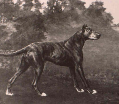 Great Dane,history,name,Reichhund,Deutche dogge,le Grande Danois,Deutche Dogge, Georges-Louis Leclerc, Comte de Buffon