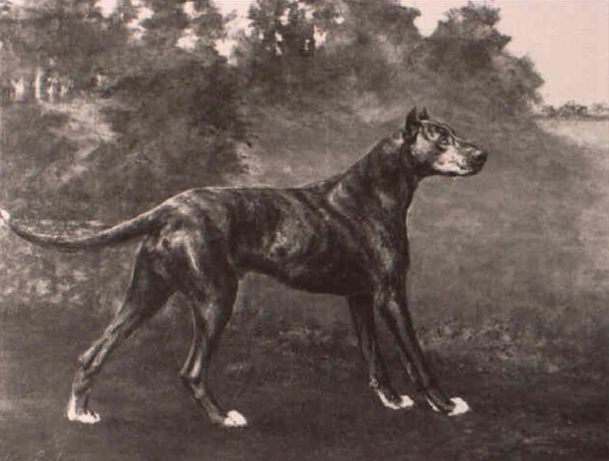 All About Great Danes, Your Complete On Line]