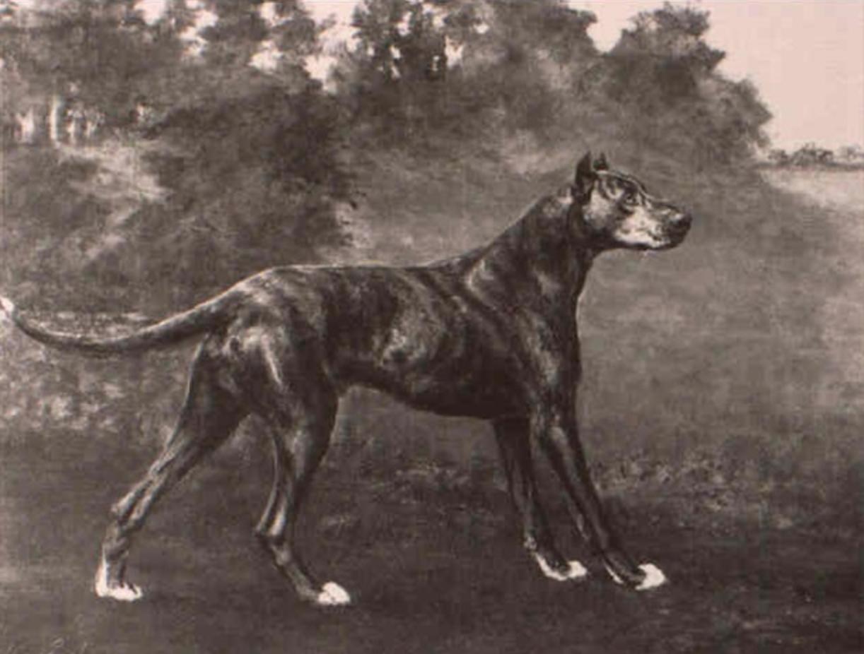Great Dane,history,name,Reichhund,Deutche dogge,le Grande Danois,Deutche Dogge, Georges-Louis Leclerc, Comte de Buffon