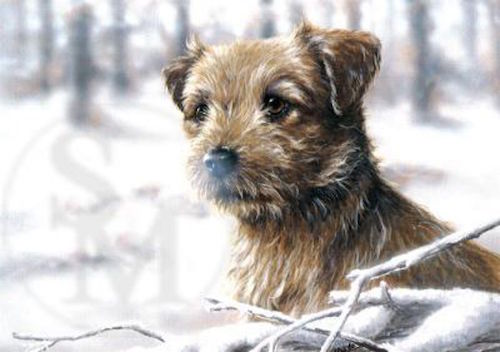 Border Terrier,TV,Commercial,movies.