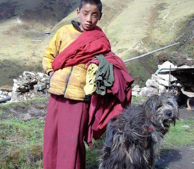Tibetan Terrier,Tsang Apso