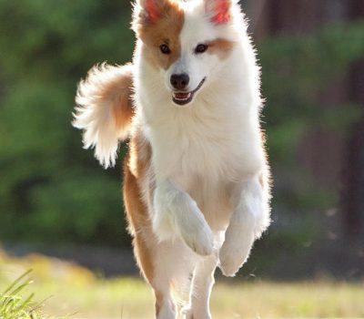 trivia,dog breeds