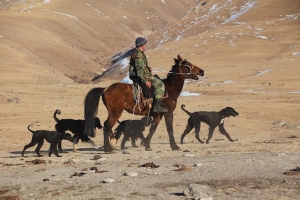 Taigan, Kyrgyzdyn Taighany, Kyrgyz Sighthound,