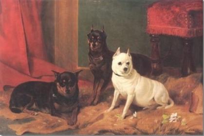 Manchester Terrier,Australian Terrier, German Hunting Terrier,Lancashire Heeler,Gentleman's Terrier