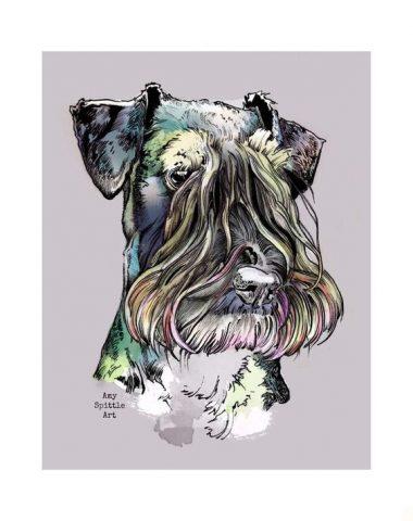 Cesky Terrier, color,genetics