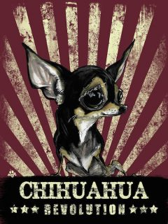 d341226688ac6 In Appreciation of Chihuahuas