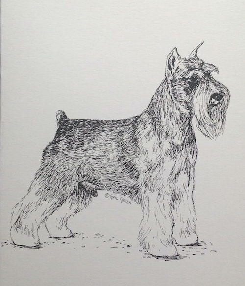coupling,Structure,length of back,standard schnauzer,old english sheepdog