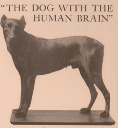 Weimaraner,Doberman Pinscher,Schnauzer, Dog with human brain,Walter A. Dyer