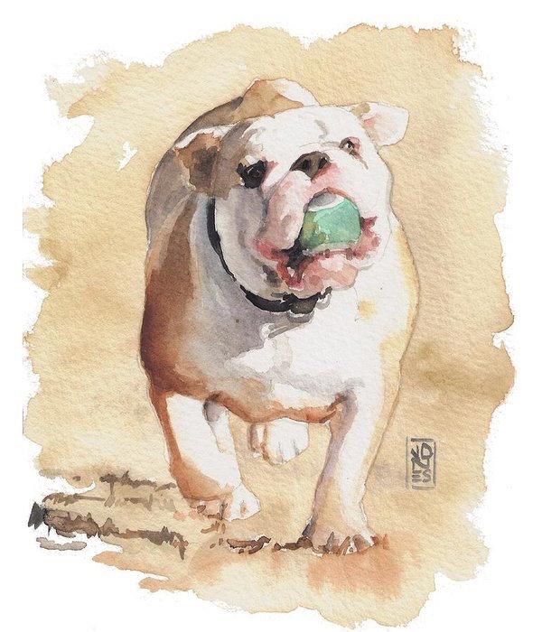 Smut,color,bulldog,standard