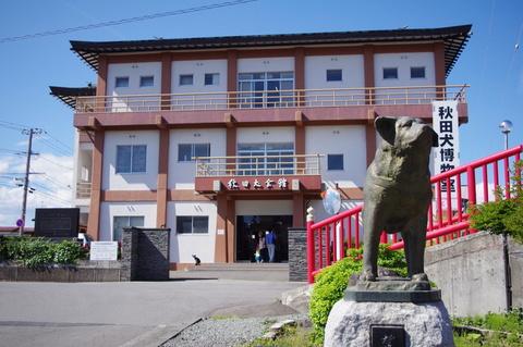 Akita,museum,dachshund