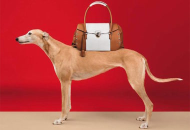 Greyhound, Trussardi, advertising, fashion, William Wegman,