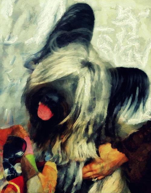 Skye Terrier,Wha Daur Meddle Wi' Me,motto,