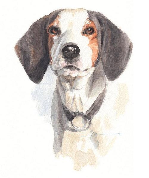 Treeing Walker Coonhound,Virginia Hound,Finley River Chief,Foxhound,Merchant's Bawlie, Motley, Mack Twain, Banjo, Hershberger, Sailor Boy, coonhound