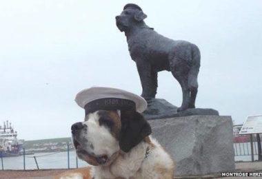 Norwegian Navy,saint Bernard,bamse,war dog,mascot