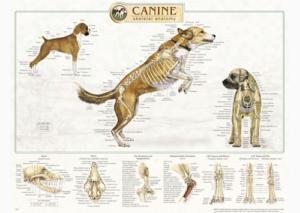 dog anatomy, charts,