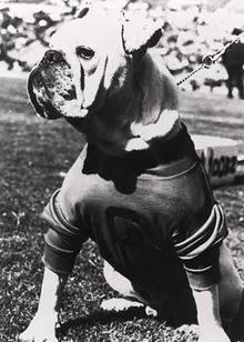 Bulldog,Uga,mascot,University of Georgia,